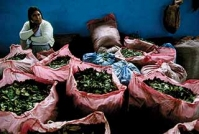 bags-of-coca-leaves