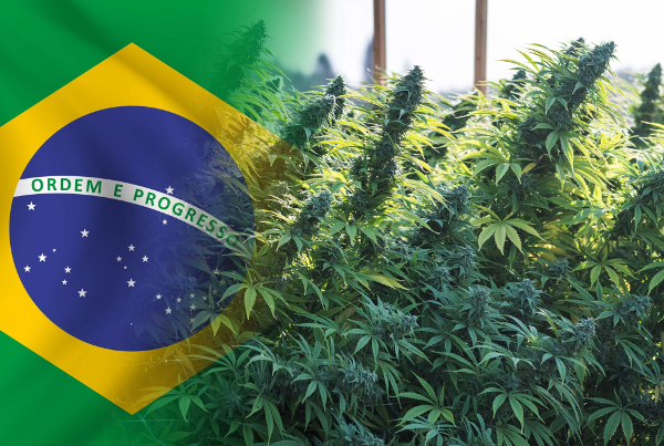 brazil flag cannabis