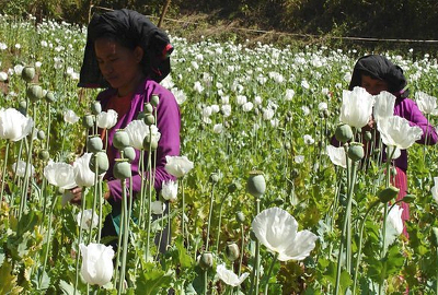 Growers' voices at the Commission on Narcotic Drugs