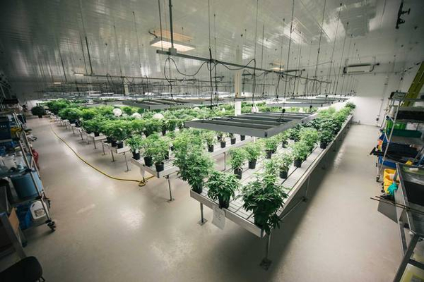 canada canopy growth facility