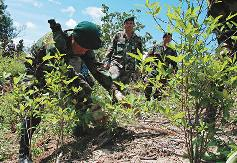 coca-eradication-bolivia