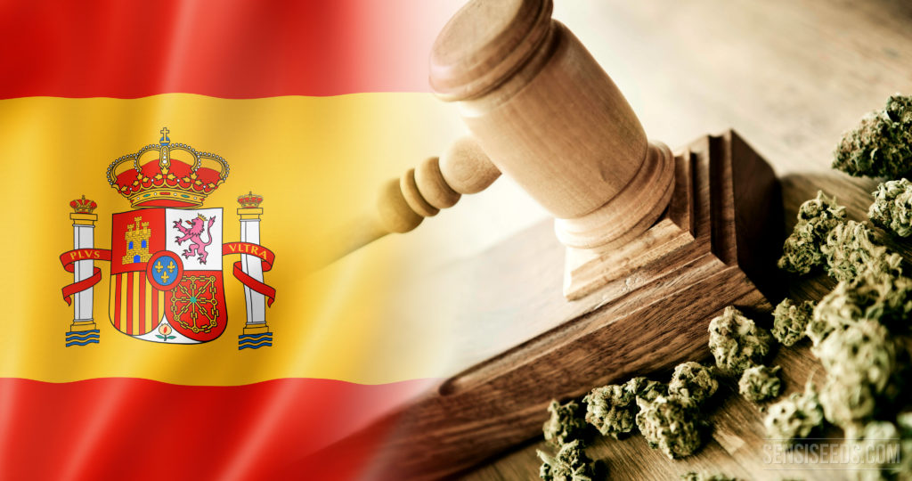 spain court cannabis