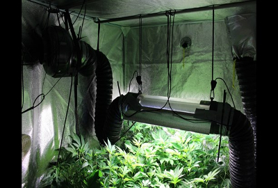 sweden-cannabis-cultivation